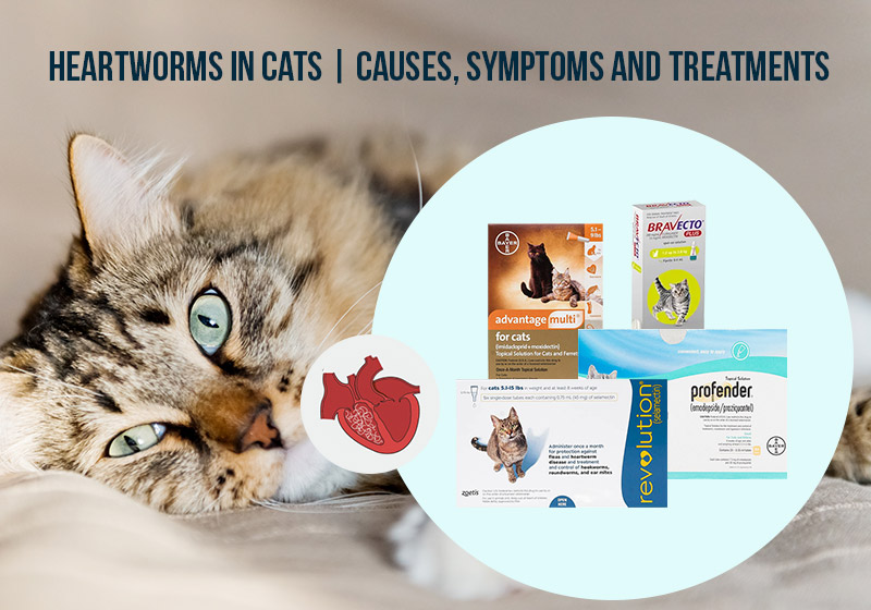 Heartworms in cats: Causes, Symptoms, and Treatments