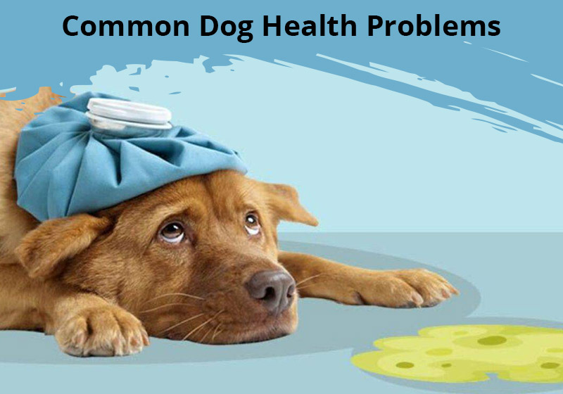 10 Most Common Health Problems in Dogs