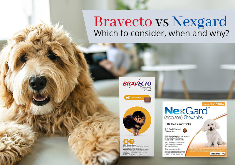 Bravecto vs Nexgard: Which to consider, when, and why?