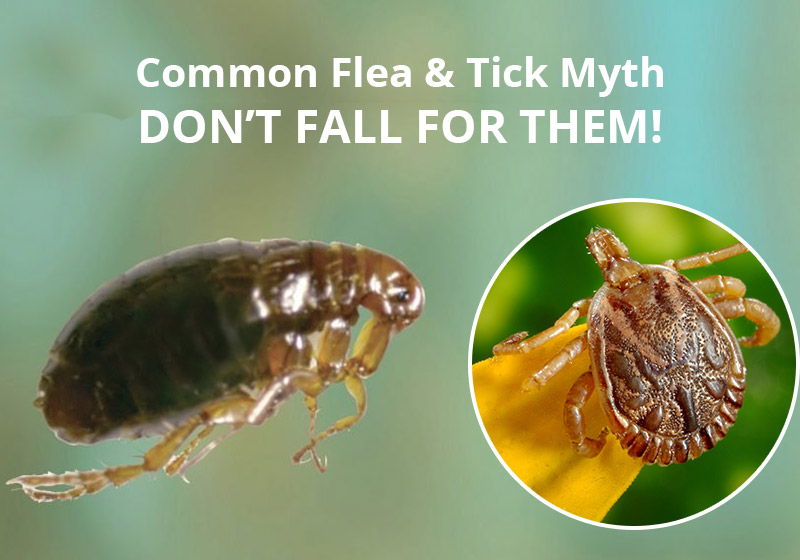 4 Common Flea And Tick Myths – DON'T FALL FOR THEM!