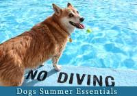 Dogs Summer Essentials