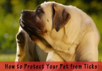 How to Protect Your Pet from Ticks