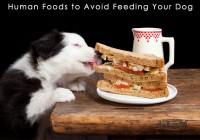 Human Foods to Avoid Feeding Your Dog