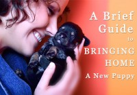 Guide to Bringing Home A New Puppy