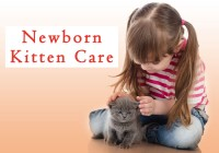 Newborn Kitten Care