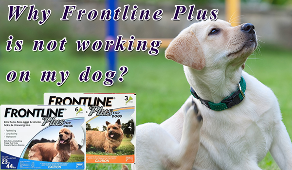 Why Frontline Plus not Working on Dog