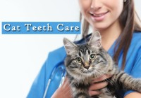 Cat Teeth Care