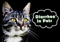 Diarrhea in Pets