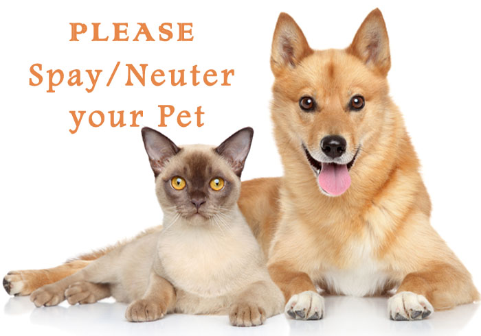 spay or neuter your pet