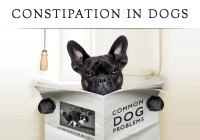 Constipation-In-Dogs