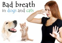 Bad Breath in Dogs and Cats
