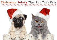 Christmas Safety Tips for your Pets