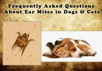 Frequently Asked Questions about Ear Mites in Dogs and Cats