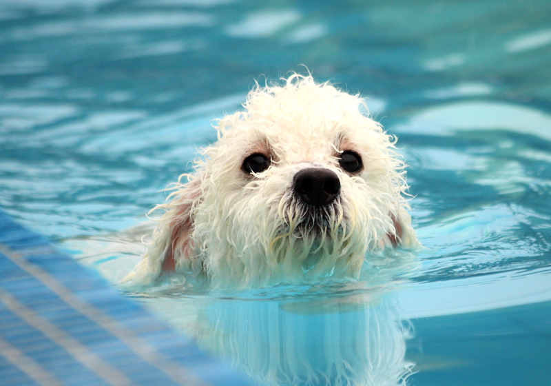 BVC_Dog-Ponds--A-cool-idea-for-hot-summers!