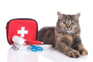first aid kit for cats