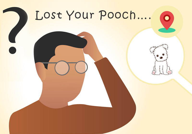 Help…I cannot find my Pooch……What Should I Do?