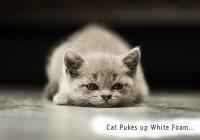 cat pukes up white foam