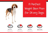 Dog's weight gaining tips