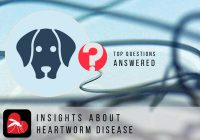 About Heartworm Disease, Symptoms and Treatment