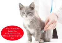 Administering Treatment To Cat