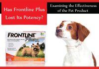 is frontline plus still effective