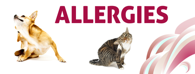 Pet Allergies Causes And Treatment