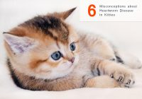 heartworm disease in cats and kitties