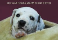 Ways To Keep Dogs Warm In The Winter