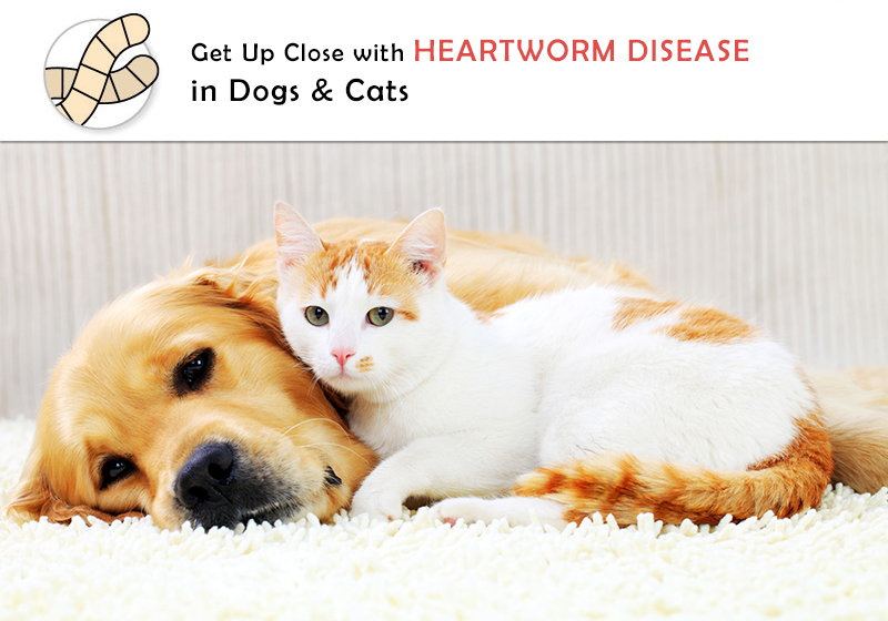Overview of Heartworm Disease in Dogs and Cats