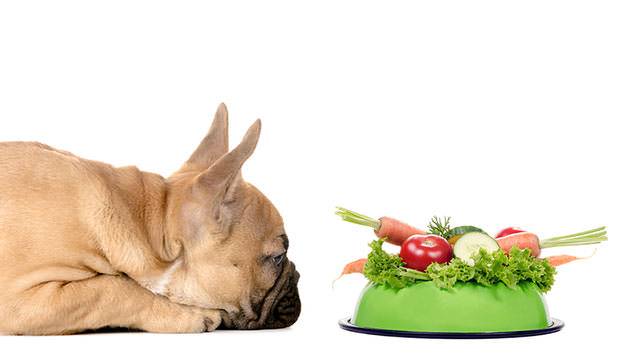 Healthy Meal To Dog