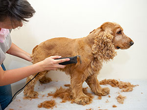 Trim Dog's Fur