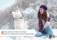 Keep your Dog's Skin from Getting Dry and Itchy During Winters