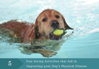 improving your dogs physical fitness
