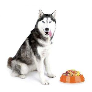 Fatty Acid Supplement In Your Dog's Diet