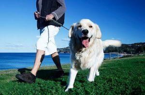 Power Walking for Dog