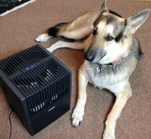 Run A Humidifier for Dog