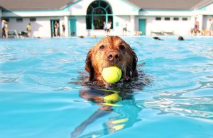 benefits of dog swimming