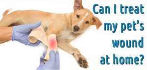 Steps To Treat Dog Wounds At Home