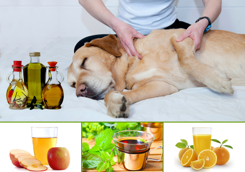 natural dog flea treatments