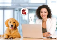 Questions To Learn About Heartworms in Dogs