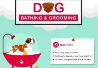 Dog Grooming Infographics