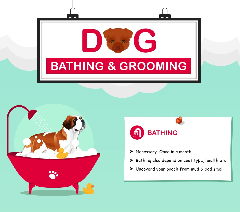 Professional Dog Grooming Tips