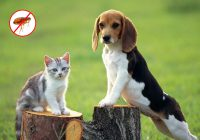 guard your pets from fleas