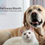 Pet Wellness Month: Dedicate This October to Your Furry Angel!
