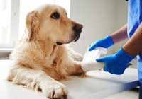 Joint Treatments for Pets