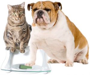 cat and dog weightloss management