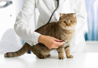 Top Health Issues Faced By Cats