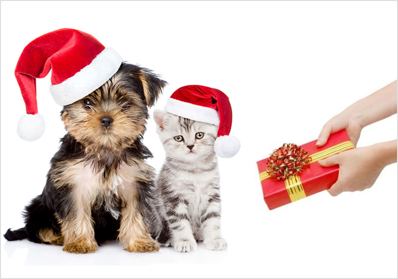 Gifts For Your Pet This New Year