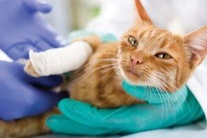 Fractures in Cat