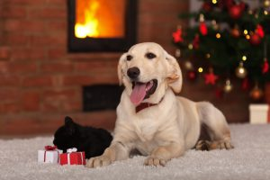 gifts for pets during new year